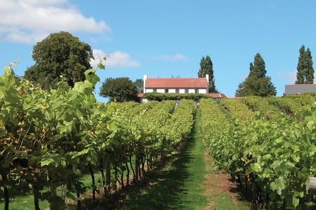 vineyard_2007_0-4e6a297