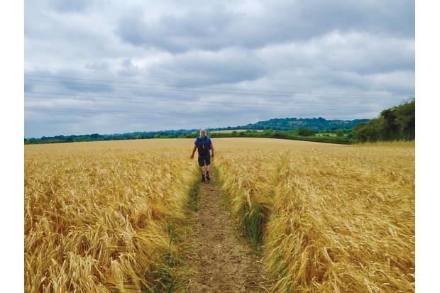 walking-through-wheat-c45ce77