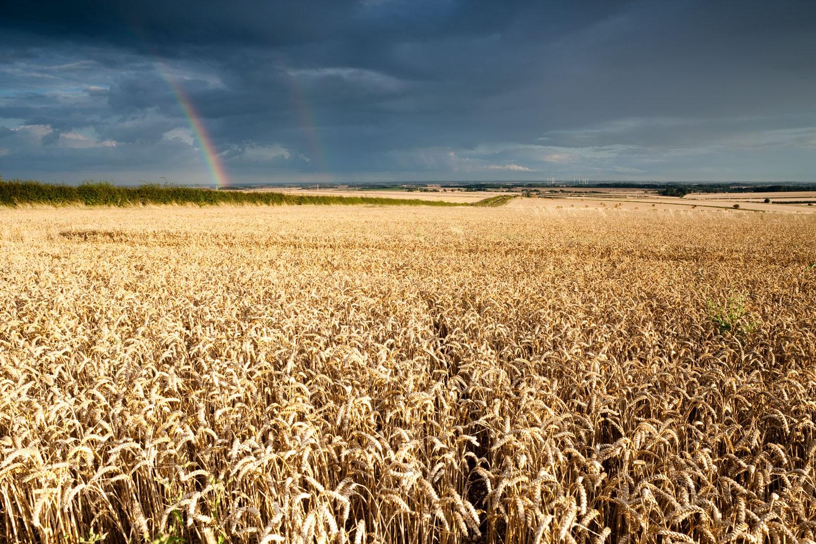 wheatfielduk-1-ea5c5ce