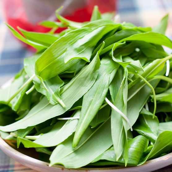 wild-garlic-leaves-609bb62