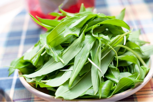 Wild garlic guide: where to find, wild garlic facts, how to