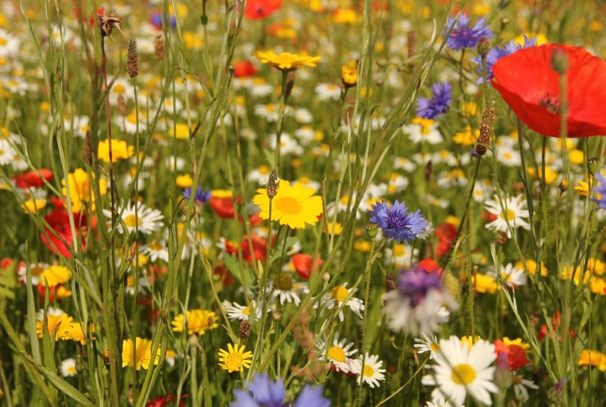wildflower-5a487fd