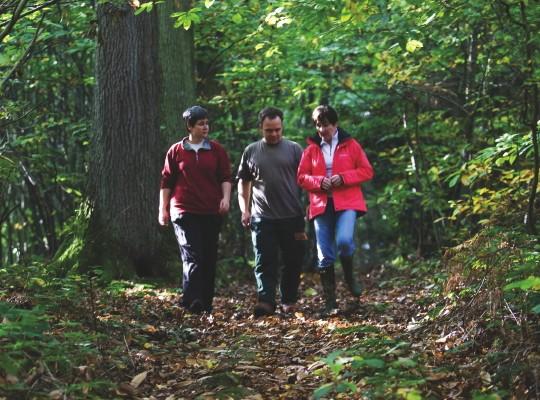 woodland_big_0-a75a190