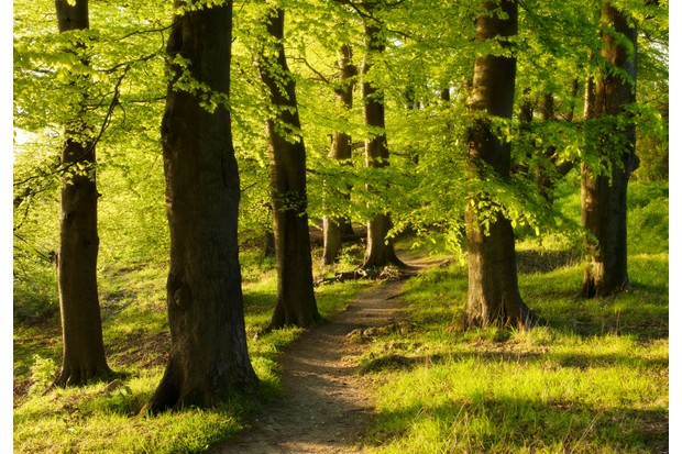 British Tree Guide Most Common Species How To Find And