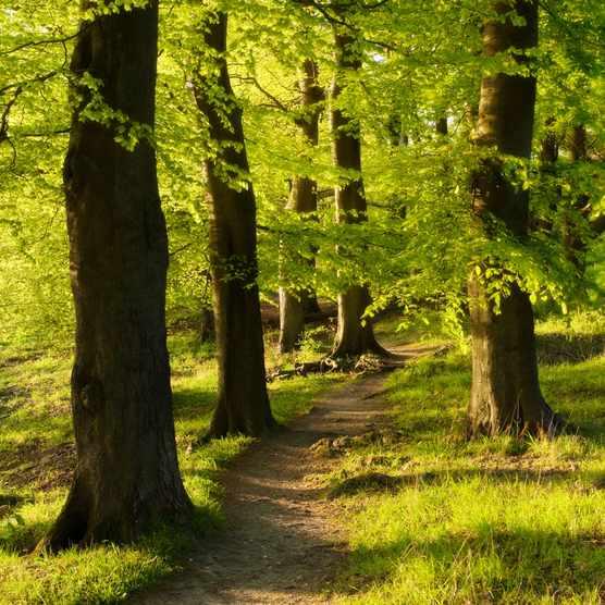 British trees