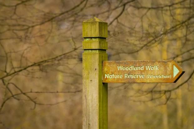 woodlandwalkwheelchairGettyImages-519709220-d24cd68