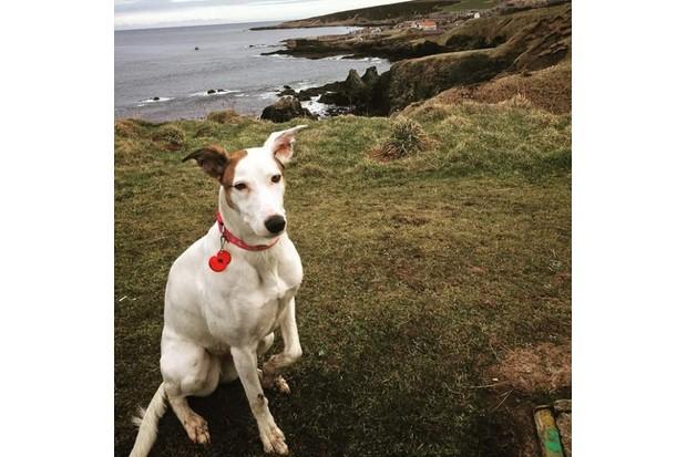 BBC Countryfile Magazine Dog of the Year-Doyle 2018