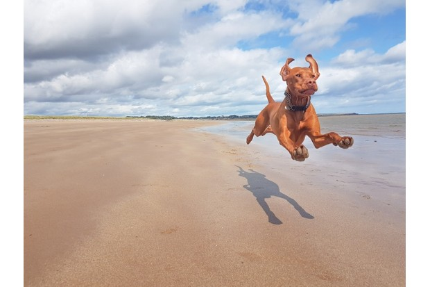 BBC Countryfile Magazine Dog of the Year-Spink