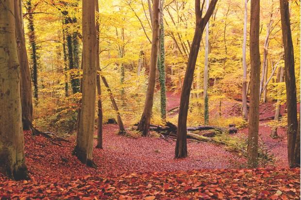 Burnham Beeches in autumn
