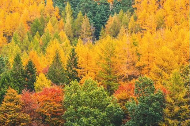 Buttermere autumn