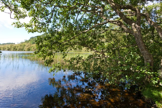 Loch and trees