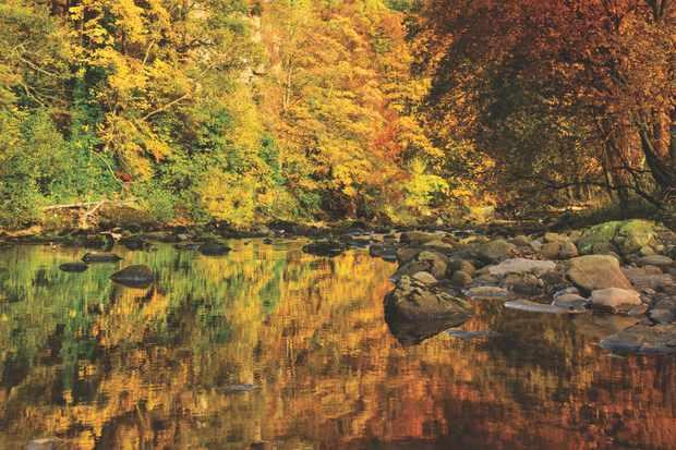 Allen Banks, River Allen Northumberland