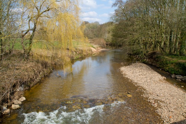 River with trees overhanging