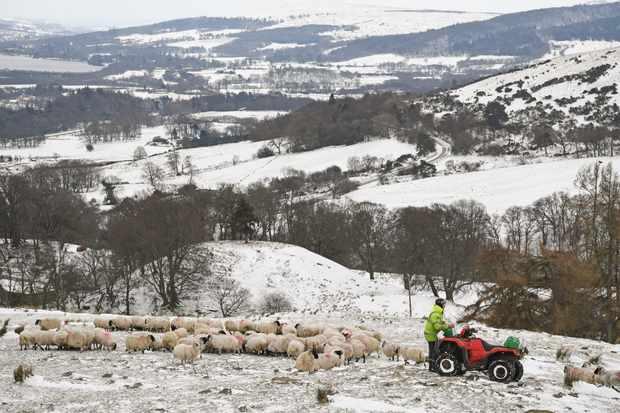 Hill farmer and sheep in Scotland