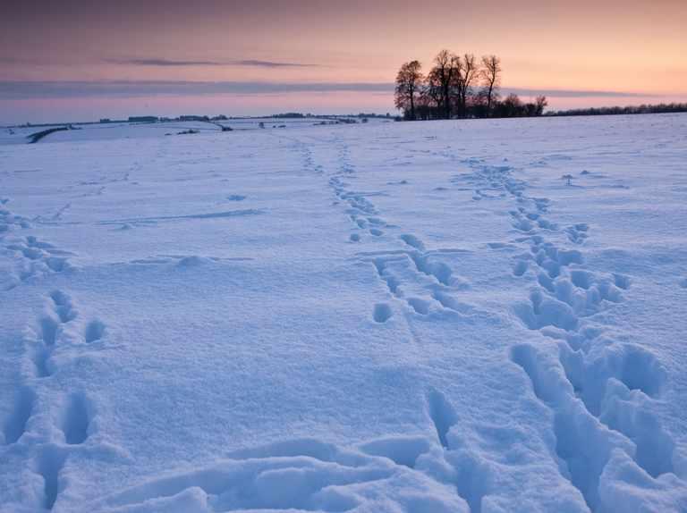 How to identify winter animal tracks