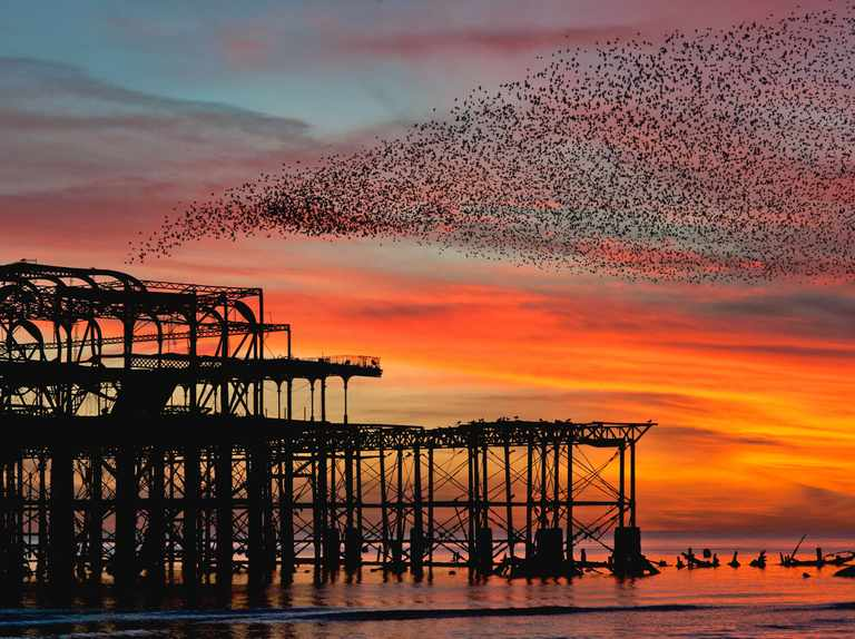 Starling murmuration guide: why and when they happen and best places to see one in the UK