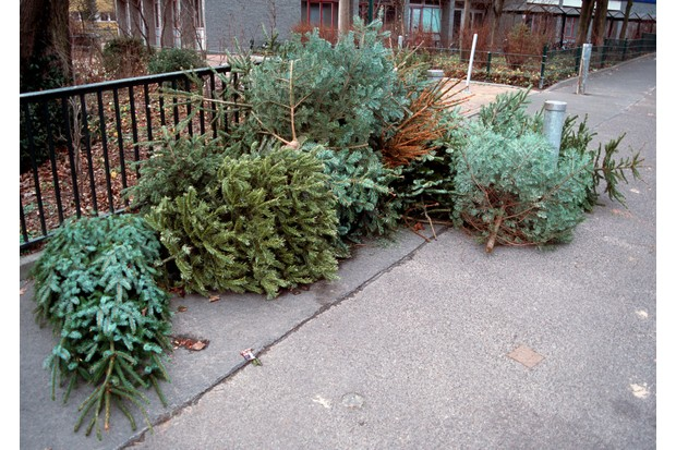 Environmentally friendly Christmas tree options