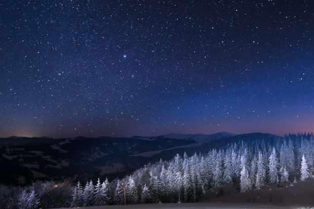 Dark winter forest in the snow