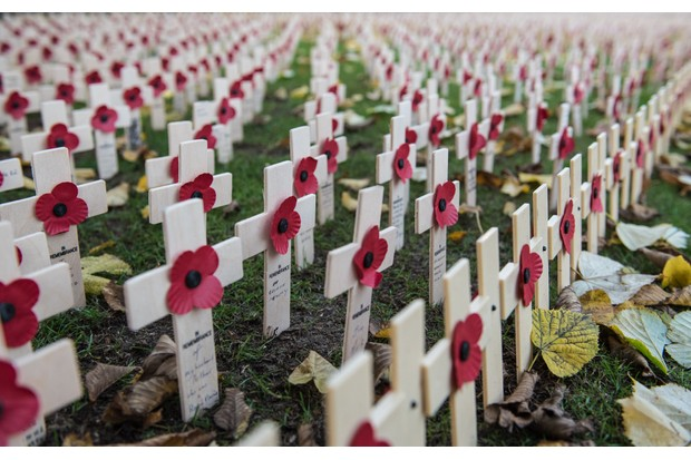 Remembrance crosses and poppies