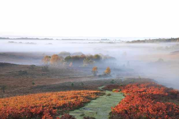 The New Forest National Park, Hampshire/Credit: Getty Images