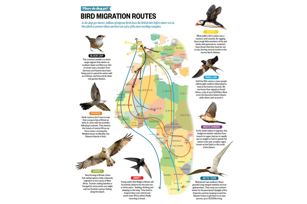 Where do birds go in winter map