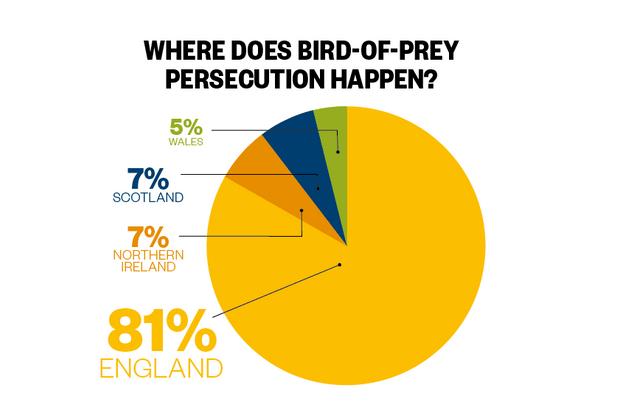 bird of prey statistics