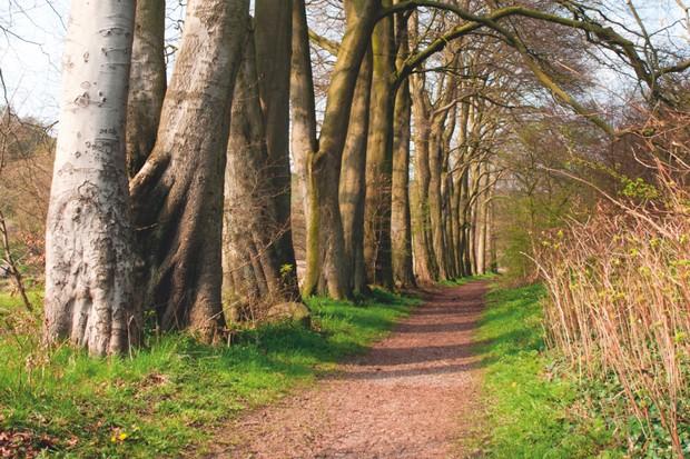 Tidewell Dale, Derbyshire