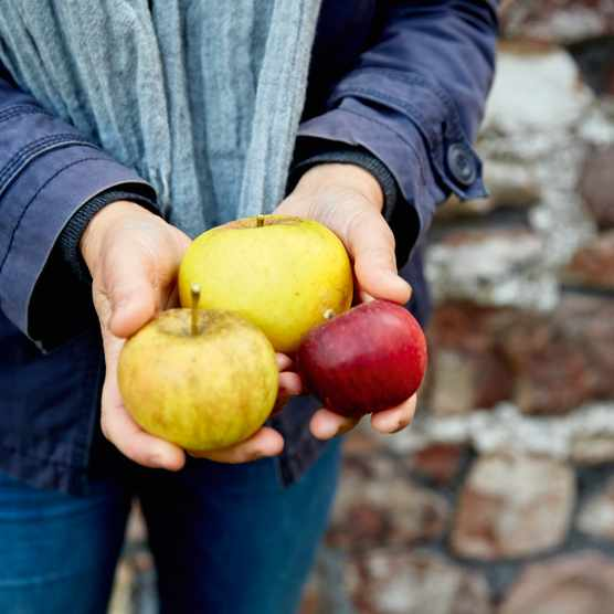 apples-in-hand