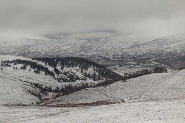 cairngorms-forest-