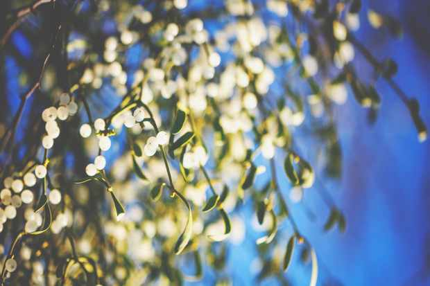 Guide to mistletoe: history, how it became a Christmas tradition and how to grow your own mistletoe