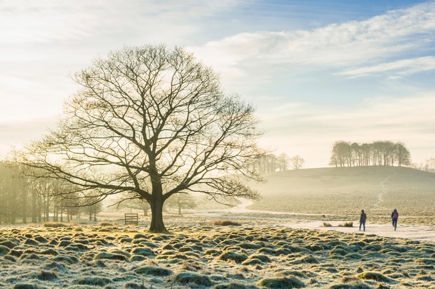 Petworth Park in the heart of the South Downs National Park, West Sussex ©Alamy