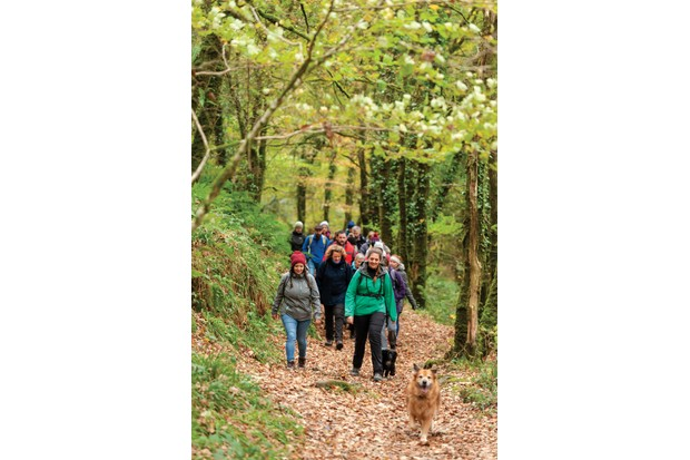 Walkers in woodland