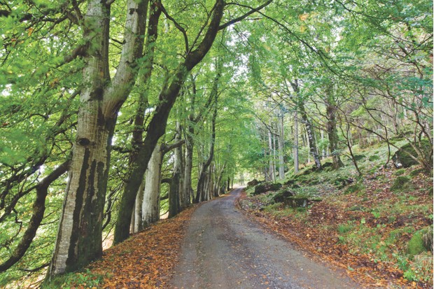 Tree lined track on the Isle of Mull, Scotland ©Alamy