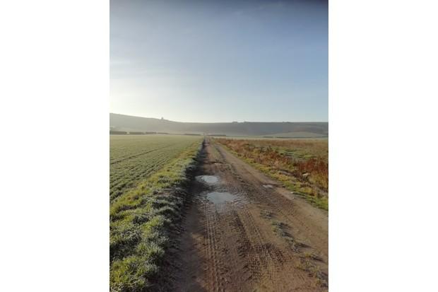 Lane through a field