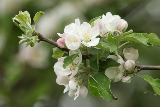 How to identify spring blossom and best places to see ...
