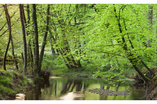 Blackwater River in the New Forest, Hampshire
