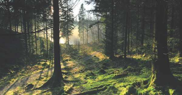 Walk: Loch Ard Forest, Stirlingshire
