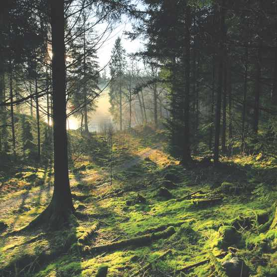 Loch Ard Forest, Stirlingshire