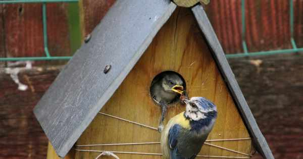 National Nest Box Week: how to help birds in your garden