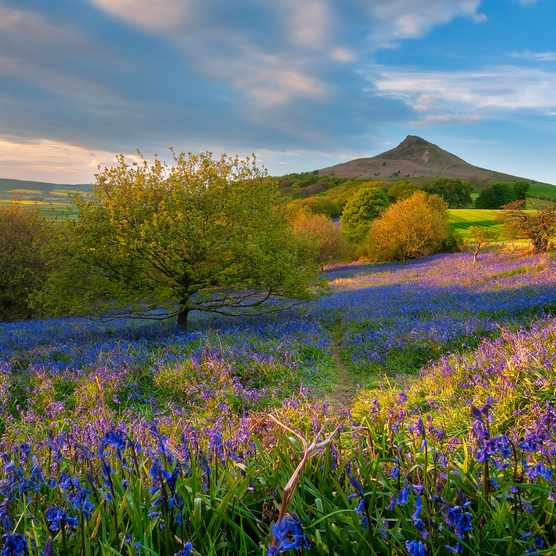 Roseberry Topping, North Yorkshire (Getty)