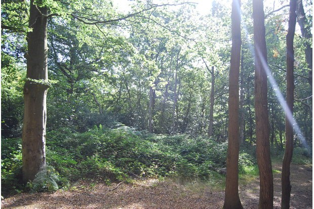 Woodland common