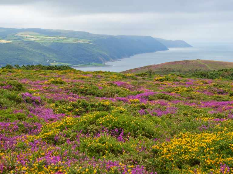 Exmoor National Park guide: where to go, places to stay and best walks