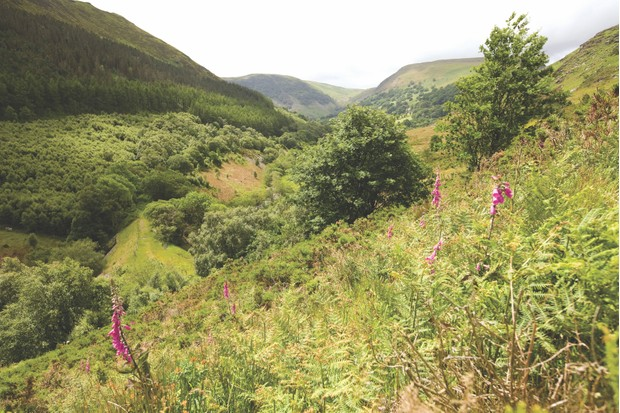 Gilfach Nature Reserve, Powys