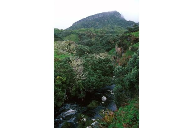 Gough Island and vegetation