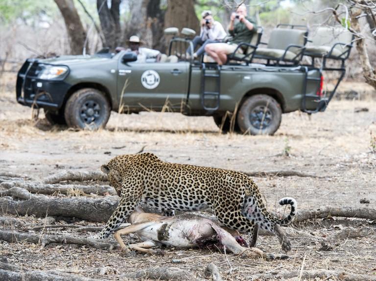 Absolute Zambia Safaris - Advertisement