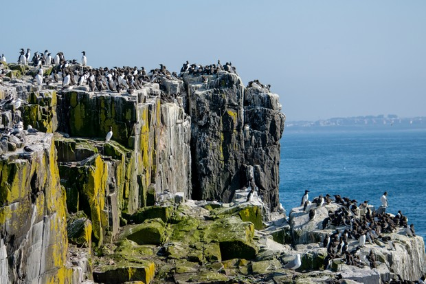 Farne Islands, Northumberland