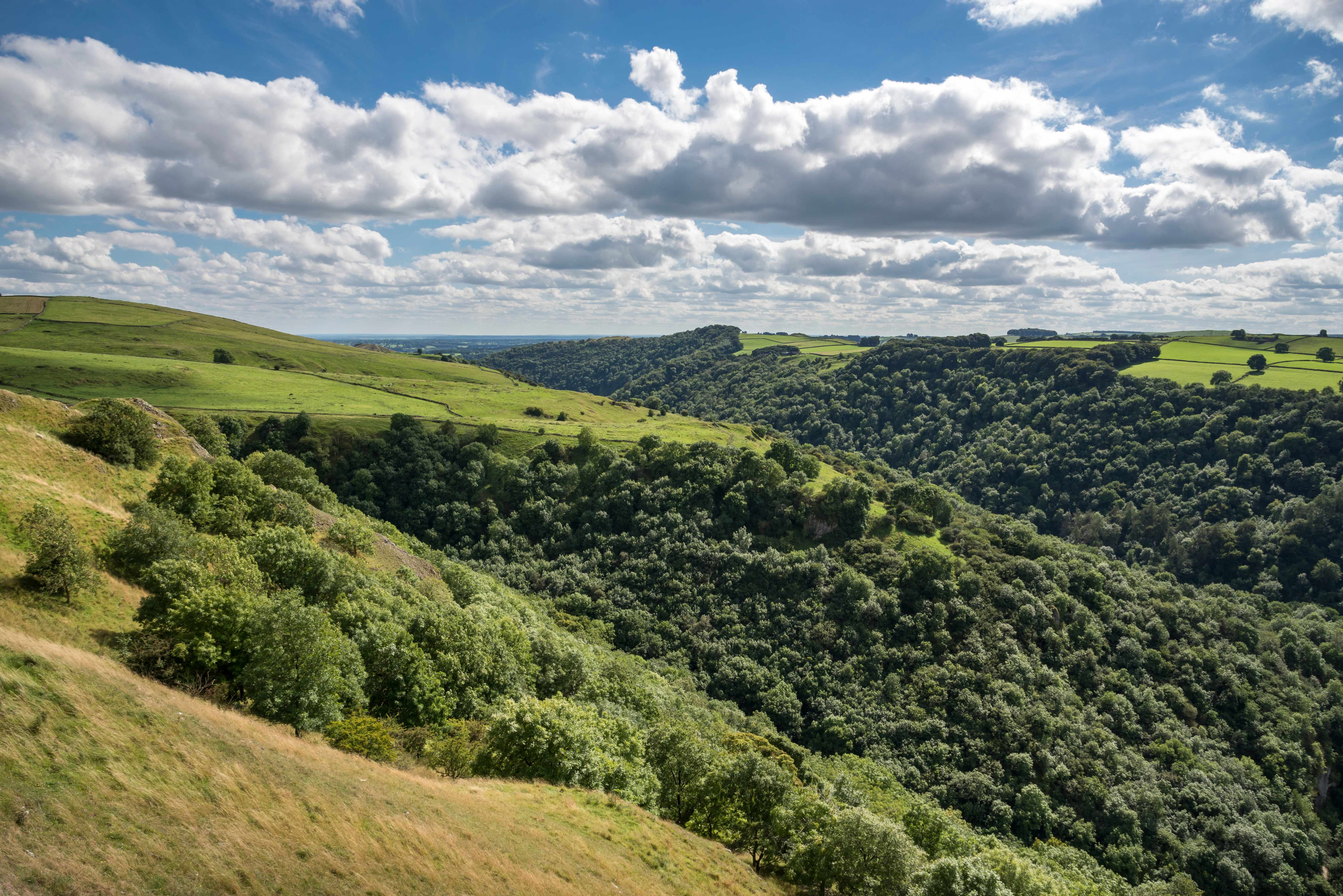 Heavily wooded slopes in Dove Dale, Peak District National Park