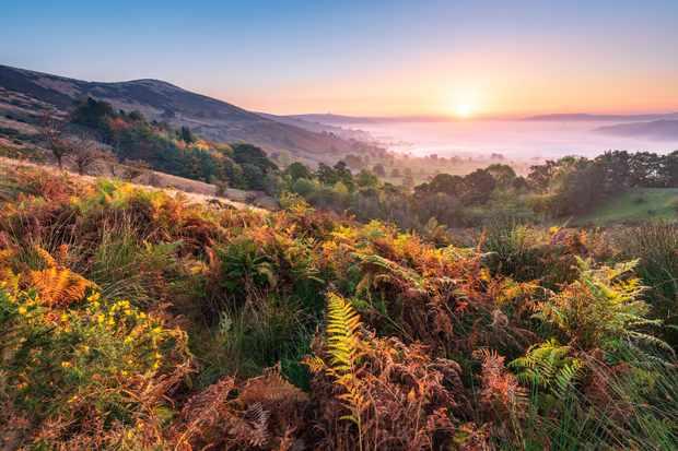 Ferns in valley in autumn