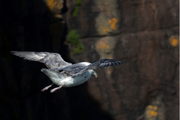 In June, sea cliffs such as those at St Abb's Head in Berwickshire, teem with birdlife ©Jake Graham