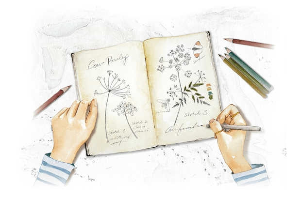 How to sketch flowers
